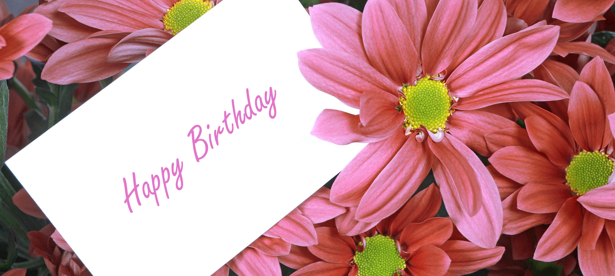 Pink Flowers with Birthday Card